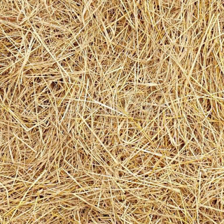 Trending mods today: Straw Texture